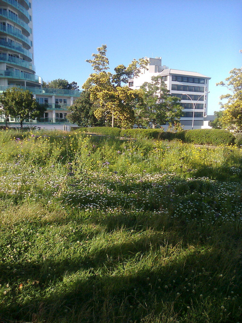 Rural sward in Downtown Tauranga