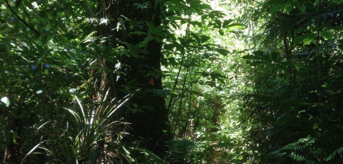 The art of walking Whakamarama