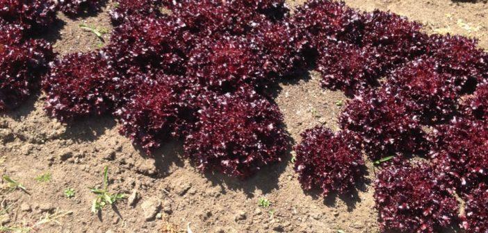 Organic green fingers: Abundant Backyard